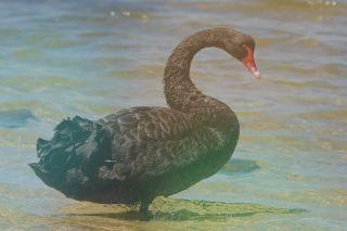 היזהרו מברבורים וחצילים שחורים, שינוי בתפיסות הסיכון